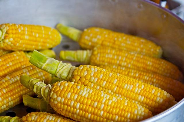 kukuřice na vaření